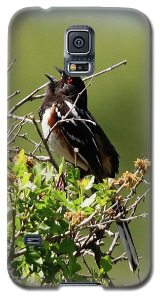 Male Spotted Towhee Galaxy S5 Case