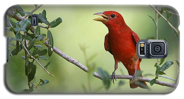 Male Summer Tanager Galaxy S5 Case