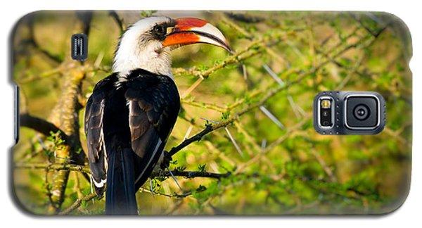 Male Von Der Decken's Hornbill Galaxy S5 Case
