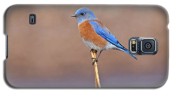 Male Western Bluebird Perched On A Stalk Galaxy S5 Case by Jeff Goulden