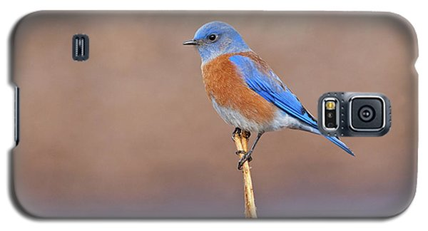 Male Western Bluebird Perched On A Stalk Galaxy S5 Case