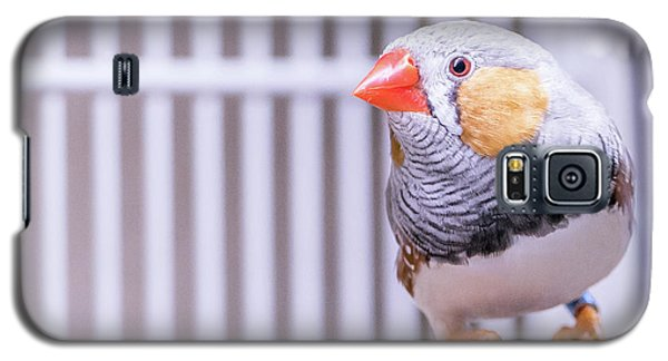 Male Zebra Finch Galaxy S5 Case