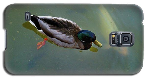 Mallard And Carp Galaxy S5 Case