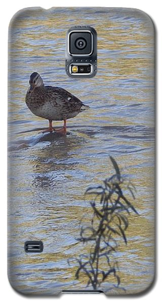 Mallard And The Branch Galaxy S5 Case