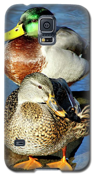 Mallard Couple Galaxy S5 Case