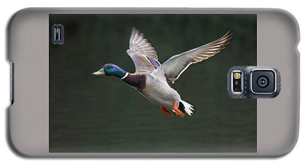 Mallard Drake In Flight Galaxy S5 Case