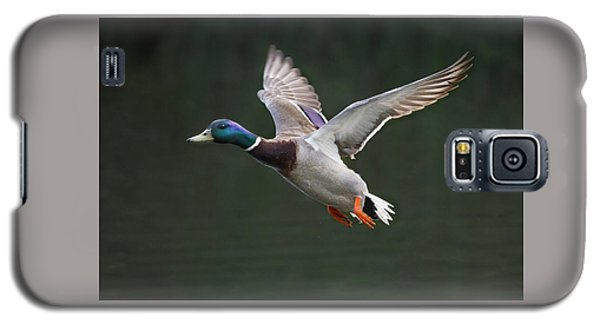 Mallard Drake In Flight Galaxy S5 Case