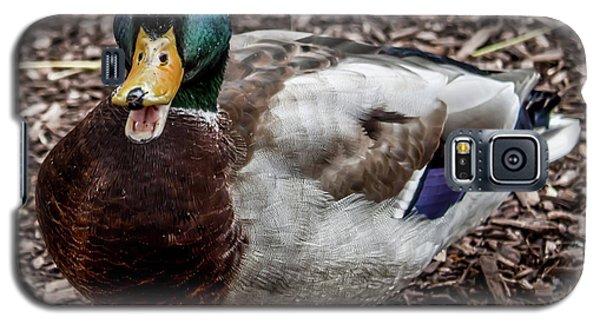 Galaxy S5 Case featuring the photograph Mallard Duck by Joann Copeland-Paul