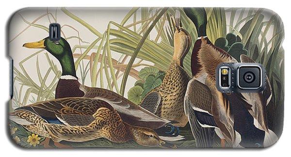 Audubon Galaxy S5 Case - Mallard Duck by John James Audubon