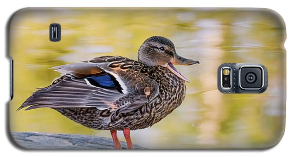 Galaxy S5 Case featuring the photograph Mallard Duck by Kathy King