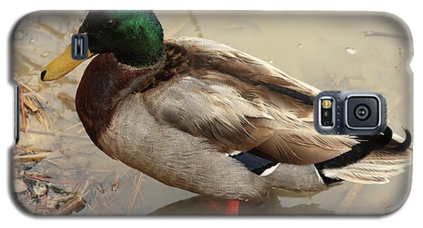 Galaxy S5 Case featuring the photograph Mallard Duck by Kim Henderson