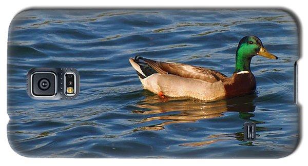 Mallard Drake Duck Swimming Galaxy S5 Case
