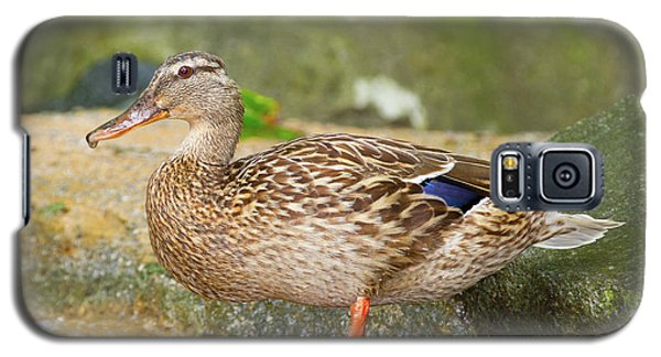 Mallard Duck Galaxy S5 Case