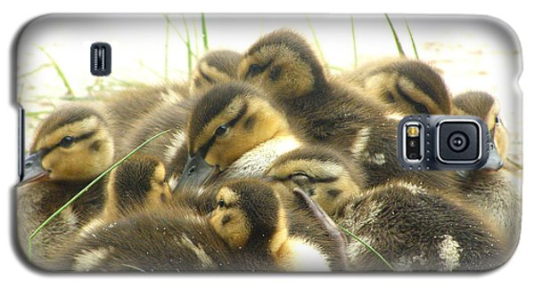 Galaxy S5 Case featuring the photograph Mallard Ducklings by Angie Rea