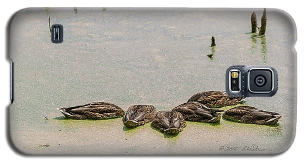 Galaxy S5 Case featuring the photograph Mallard Fine Dining by Edward Peterson