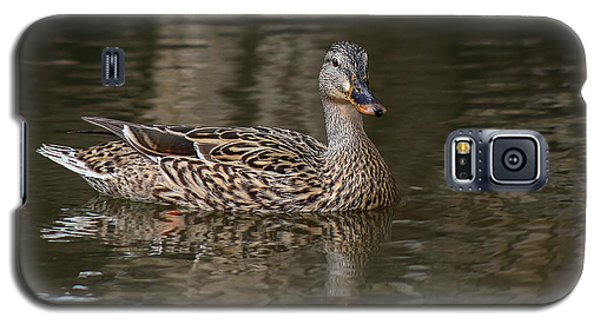 Mallard Hen Galaxy S5 Case