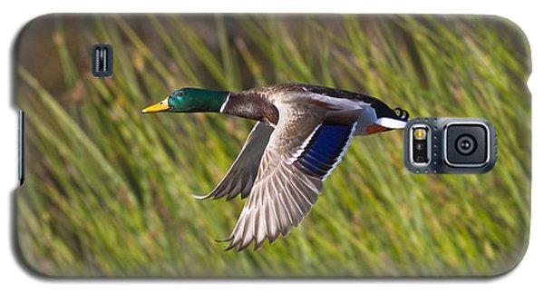 Mallard In Flight Galaxy S5 Case
