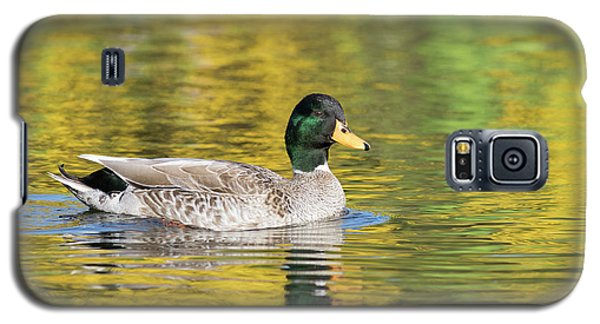 Mallard In Yellow Galaxy S5 Case