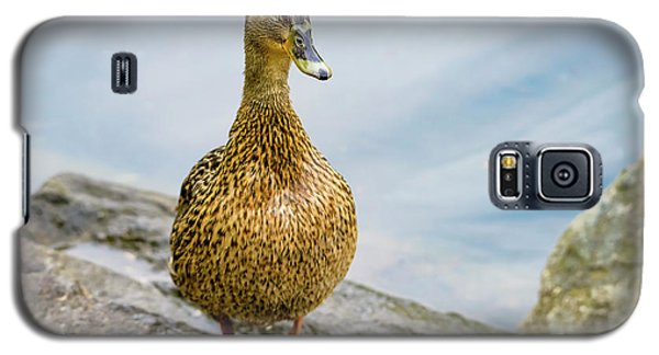 Galaxy S5 Case featuring the photograph Mallard  by Kathy King