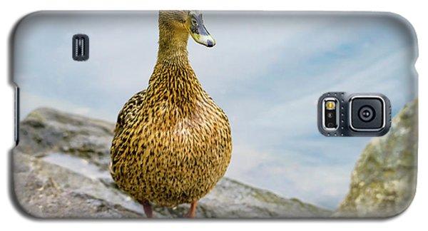 Mallard  Galaxy S5 Case