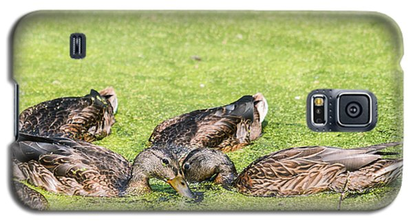 Galaxy S5 Case featuring the photograph Mallards Coming Up For Air by Edward Peterson