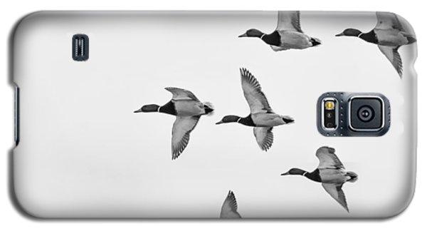 Mallards Galaxy S5 Case by Dan Traun