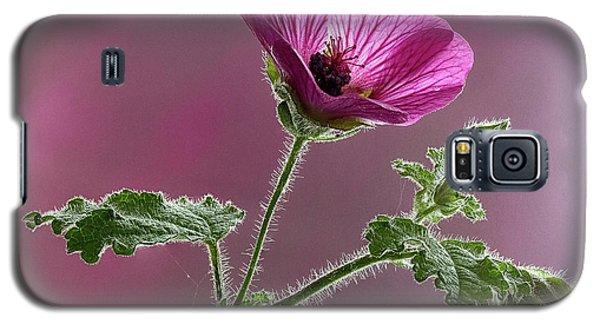 Mallow Flower 3 Galaxy S5 Case