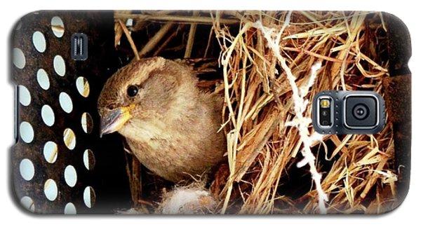 Mama Bird Galaxy S5 Case