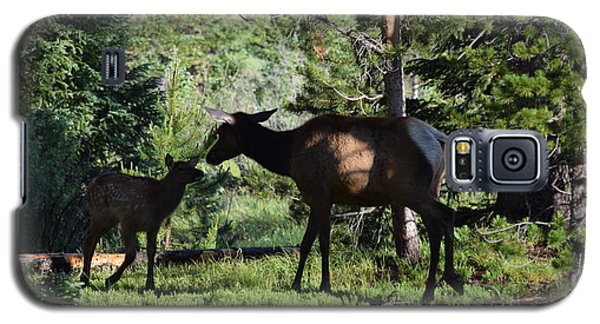Elk Calf - Mother Rmnp Co Galaxy S5 Case