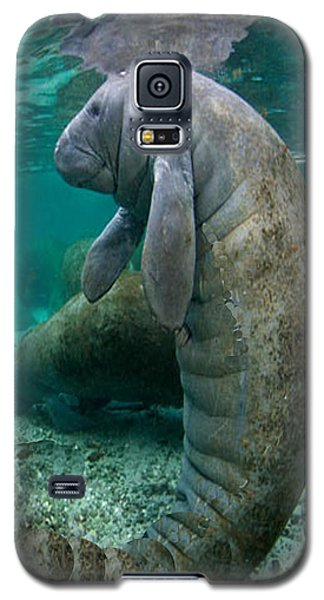 Manatee In Crystal River Florida Galaxy S5 Case by Merton Allen