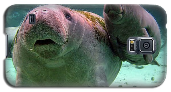Manatee Mom And Calf Galaxy S5 Case