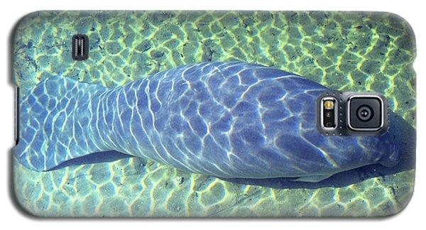 Manatee Galaxy S5 Case