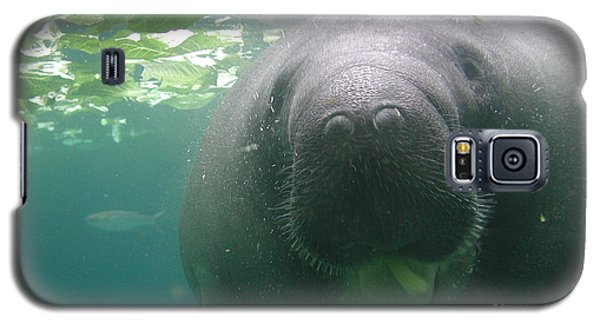 Manatee Raspberry Galaxy S5 Case