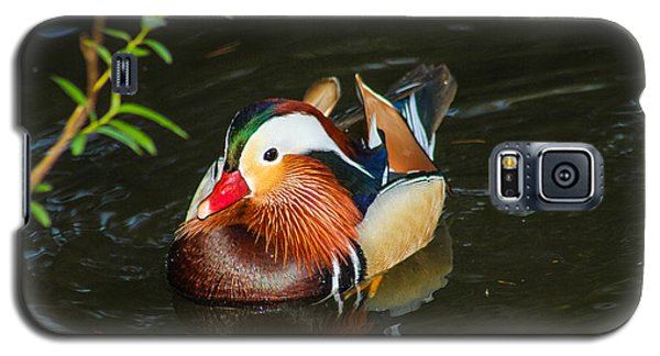 Mandarin 3 Galaxy S5 Case