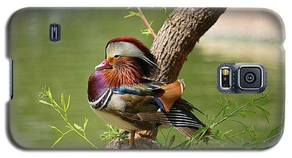 Mandarin Duck On Tree Galaxy S5 Case