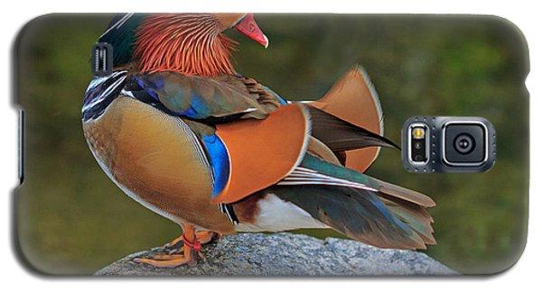 Galaxy S5 Case featuring the photograph Mandarin by Robert Pilkington