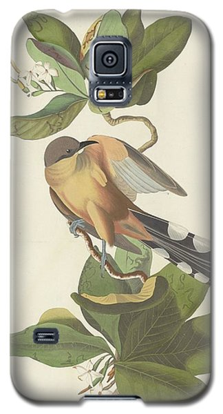 Mangrove Cuckoo Galaxy S5 Case by Dreyer Wildlife Print Collections
