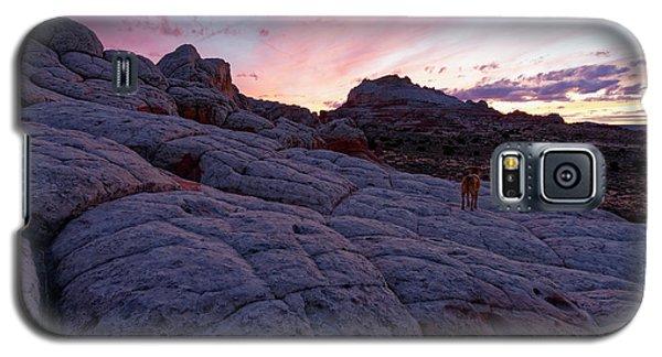 Galaxy S5 Case featuring the photograph Man's Best Friend Sunset by Jonathan Davison