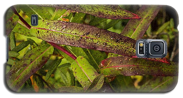 Many Colors Of Fall Fireweed Galaxy S5 Case
