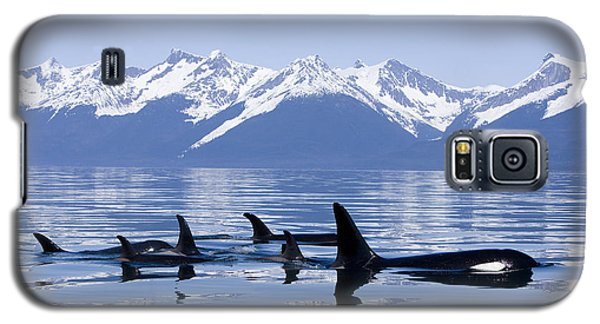 Many Orca Whales Galaxy S5 Case by John Hyde - Printscapes