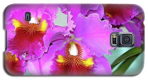 Many Purple Orchids Galaxy S5 Case