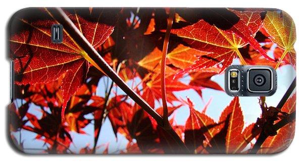 Maple Fire Galaxy S5 Case
