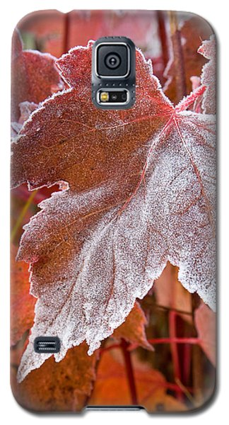 Maple Frost  Galaxy S5 Case