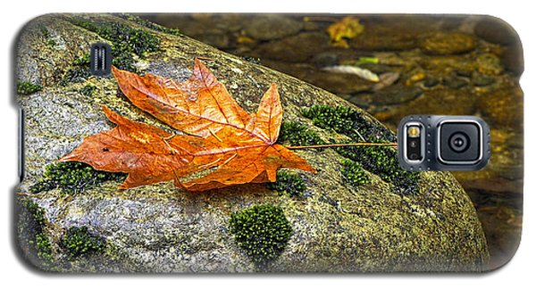 Maple Leaf On A Rock Galaxy S5 Case