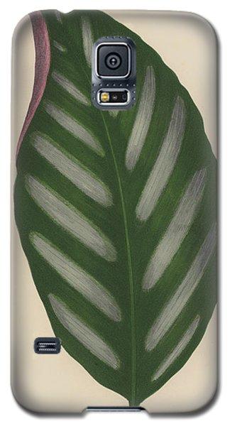 Maranta Porteana Galaxy S5 Case