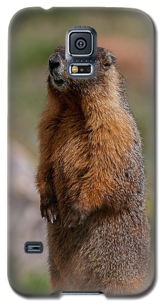 Galaxy S5 Case featuring the photograph Marmot by Gary Lengyel