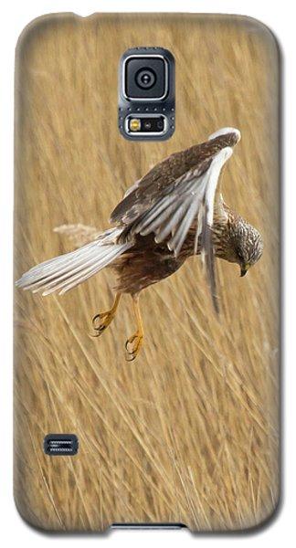 Marsh Harrier Hunting Galaxy S5 Case