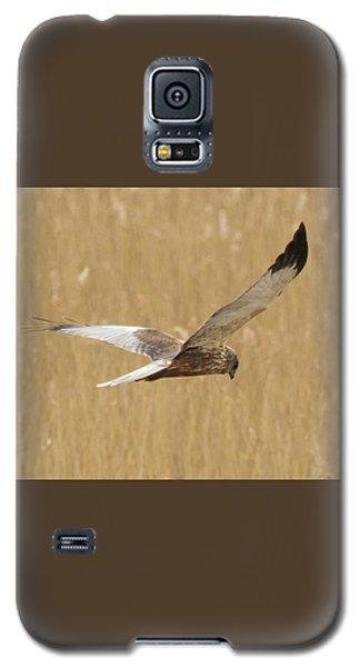 Marsh Harrier Quartering Galaxy S5 Case