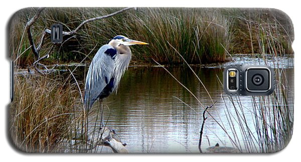Marsh Pond Great Blue Heron Galaxy S5 Case by Phyllis Beiser