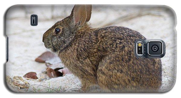 Marsh Rabbit On Dune Galaxy S5 Case